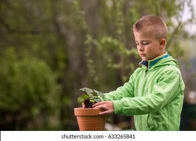 Young boy is planting a seedling of strawberry in a terracotta pot, to grow on balcony. Home grown fruit and vegetables, biodynamic farming, organic horticulture concept photo.