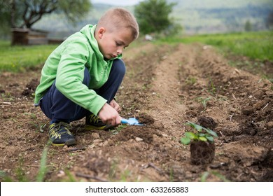 Young boy is planting a seedling of strawberry in a home field.  Home grown fruit and vegetables, biodynamic farming, organic horticulture concept photo.