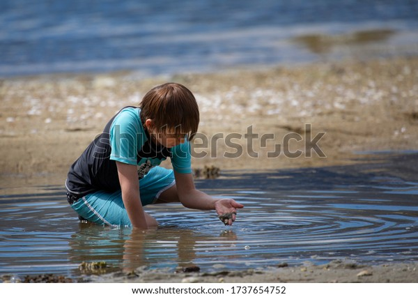 Young boy playing in a small pool of water looking for shells beside the ocean.