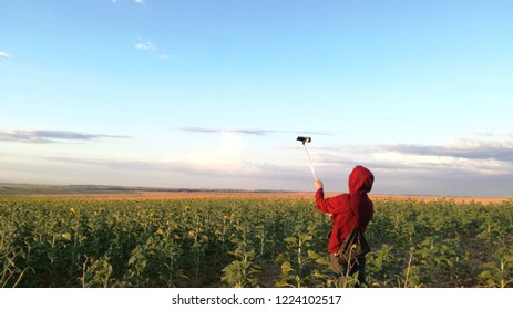 Young boy recording a video of agrarian landscape. Field sown with sunflower in the landscape to the horizon. Sunset in the Spanish countryside.