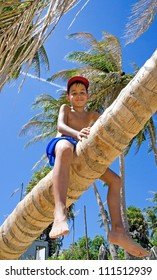 Young boy sits on a palm tree in a tropical beach