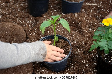 Young boy sitting in a bin of soil transplanting a pepper plant inside a greenhouse