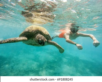 Young boy snorkel synchronous swim with big adult green sea turtle (chelonia mydas) in exotic tropics paradise. Marsa Alam, Egypt. Summer holiday vacation concept