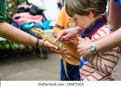 A young boy touching a bearded dragon at a zoo