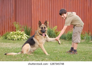 Young boy walking with a big dog and coaching her, holding a German shepherd dog for a pawn on the street in the evening