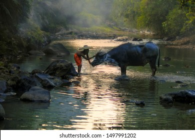 Young boy washing his buffalo at beautiful river in Bogor West Java Indonesia. 04 08 2019