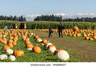 Young Boy and Woman Walking in Halloween Pumpkin Patch, Field and Corn Maze in the Background