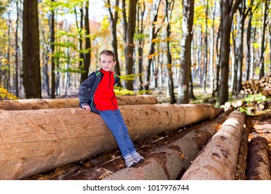 Young boy in the woods stands on logs.
