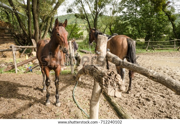 Young Brown Beauty Horse Mother Stock Photo (Edit Now) 712240102