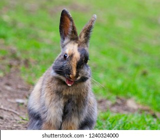 A young brown bunny smiling at a park during spring