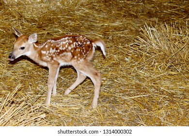 Young brown deer at the park
