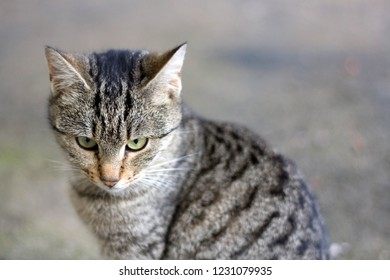 Young brown tabby cat sitting in the garden, curiously looking aroung. Seleective focus.