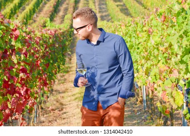Young brown-haired man with beard standing in the vineyards and admiring the autumn leaves while holding a glass of white wine. The handsome winemaker is wearing a dark blue shirt and sunglases.