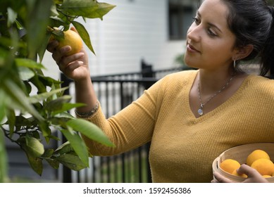Young brunette woman picking oranges from a tree while holding a basket full of oranges at home