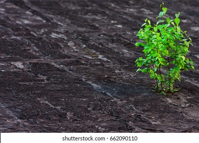 The young bush has sprouted through concrete and roofing material. Striving for life and growth. Nature versus man. The background