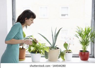 Young businesswoman sprays plants in flowerpots by window