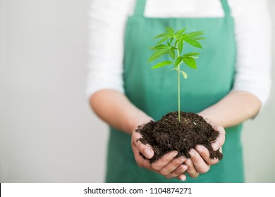 a young cannabis plant held by a women's hand