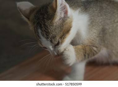 A young cat.