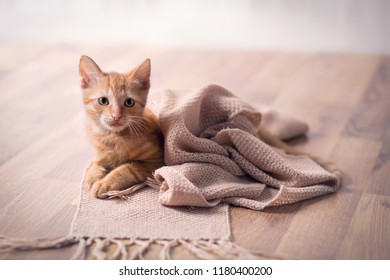 Young cat adorable resting on blanket