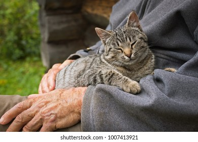 A young cat of brindle coloris sleeping on the knees of a man
