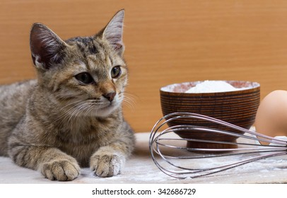 young cat eating food from kitchen plate