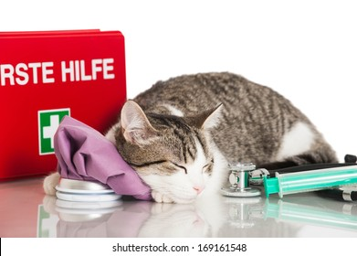 Young cat with emergency kit