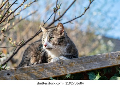 Young cat enjoying the warmth of the sun on a shed roof in the garden and looking for prey