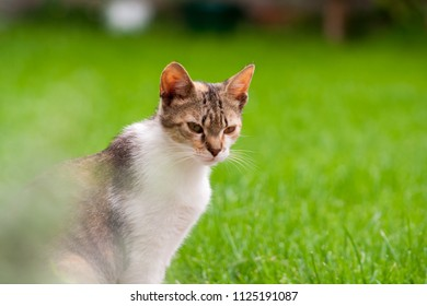 young cat in garden on a green background