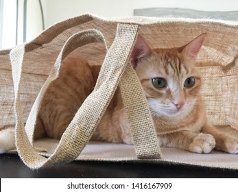 Young cat hiding in a brown fabric bag handbag canvas