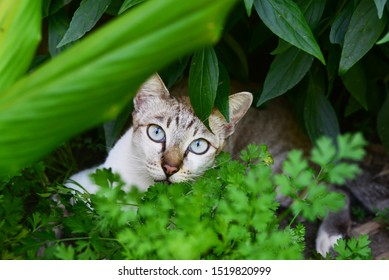 young cat hunting in garden