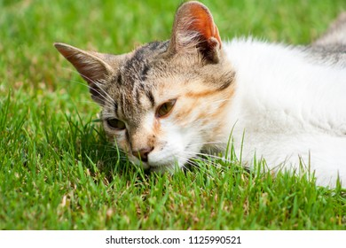 A young cat lies on the grass, rests and plays