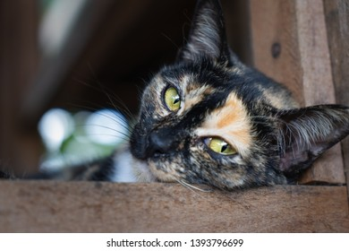 Young Cat Looking directly at the camera in an adoption centre, animal shelter. Cat longing to be adopted looking sad because she doesn't have a loving family.