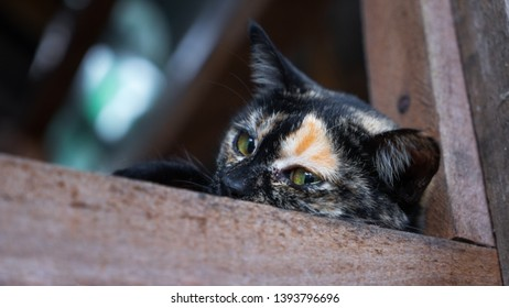 Young Cat Looking off to the right and upset in an adoption centre, animal shelter. Cat longing to be adopted looking sad because she doesn't have a loving family.