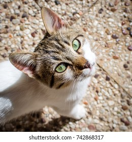 Young cat looking up, close up, Crete, Greece