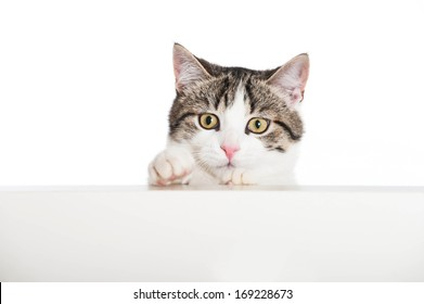 Young cat looks over a wall