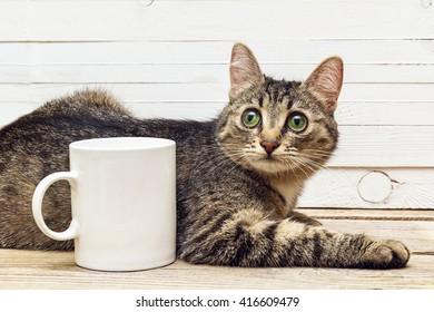 Young cat lying next to a white coffee mug. Design a coffee mug