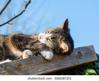 Young cat lying on a shed roof in the garden and enjoying the warmth of the sun