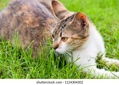 young cat lying and resting on the grass