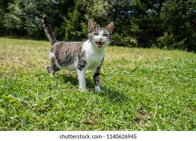 young cat on grass