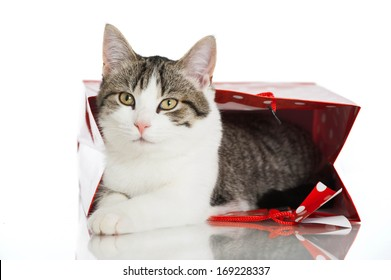 Young cat in a paper bag