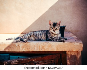 Young cat relaxing and lying in the sun, on a stone sideboard