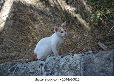 A young cat sitting on the edge of a wall.
