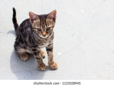 young cat is sitting on the ground