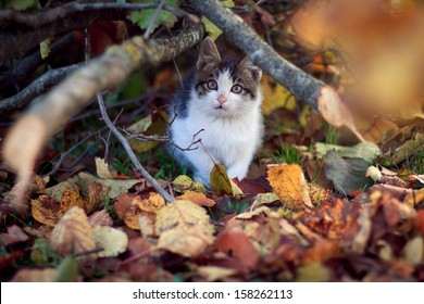 Young cat under the tree
