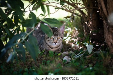 Young cat in the undergrowth.