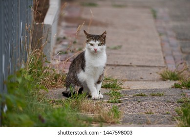 young cat with white and grey tabby fur sits next to a garden on a rural footpath, from the cracks of which a little green grows