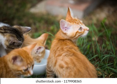 young cats around a water bowl