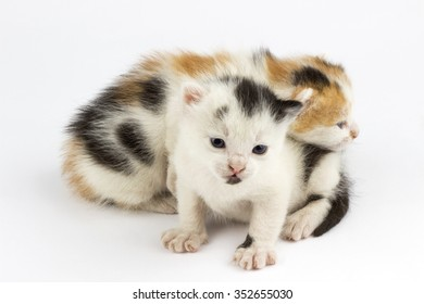 Young cats on a white background.