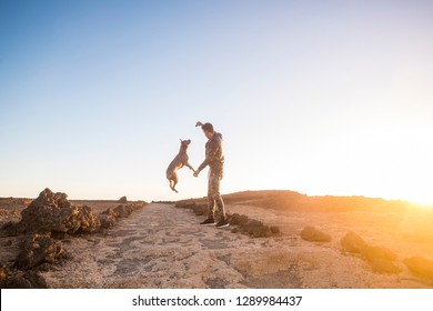 Young caucasian man play with his beautiful healthy amstal dog in outdoor leisure activity and time for friendship - best friend forever and pet therapy concept - sunset and sunlight in background