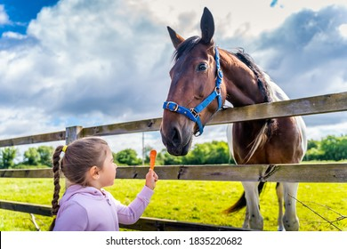 Young, Caucasian White, girl watching and feeding horse with a carrot on the field or farm at bright sunny day, Dublin, Ireland